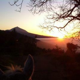 Bonos para Paseos a Caballo por el monte de La Esperanza